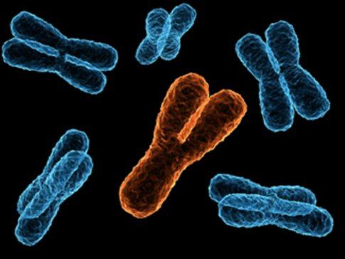 xromosomaa