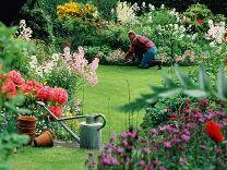 man in garden