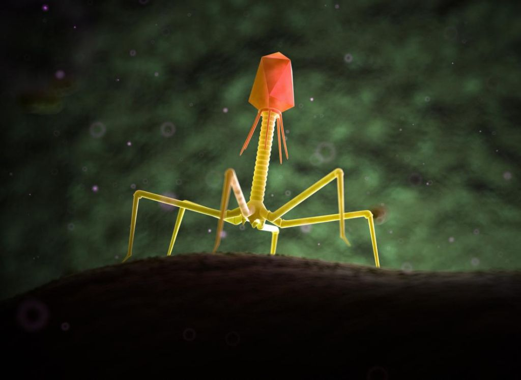 a-depiction-of-a-bacteriophage-1024x747-1